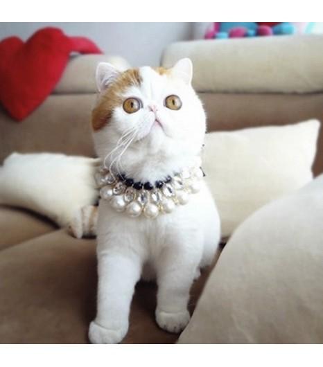 instagram cat Snoopy