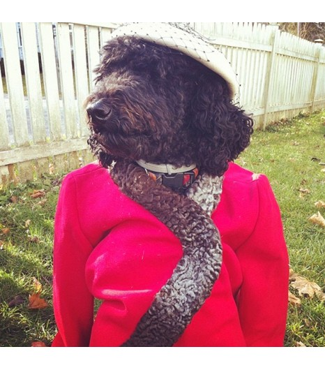 instagram dog Remy