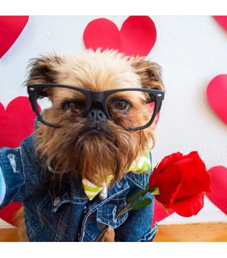 instagram dog Digby and Aloysius Van Winkle
