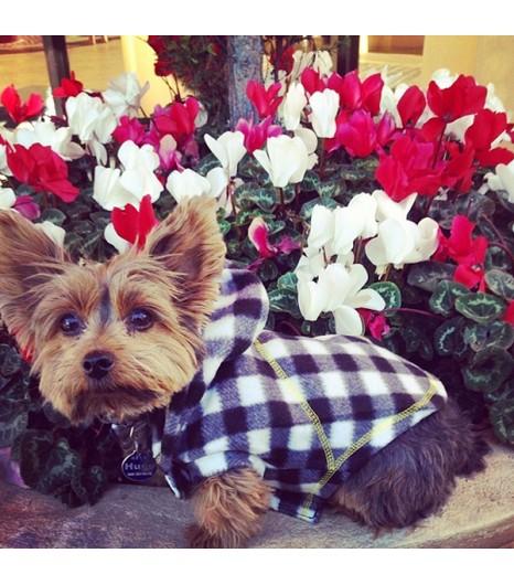instagram dog Fleayonce